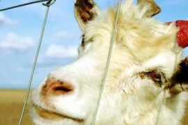 草原围栏网的起源和广泛用途